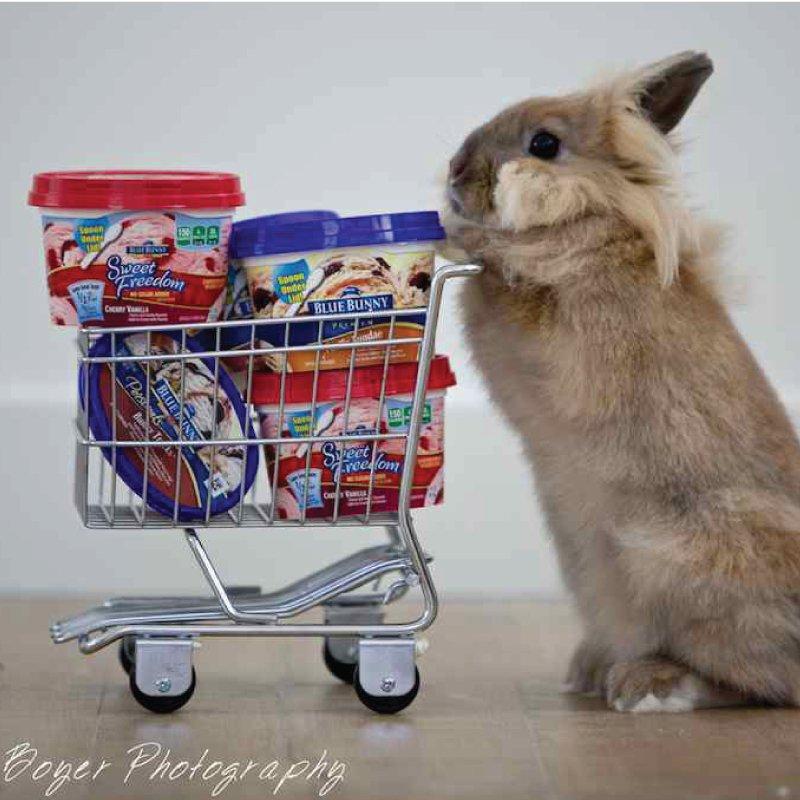 Blue Bunny custom photography